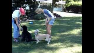 The Canine Classroom - Dog & Puppy Socialisation Training