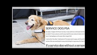∞If A Service Dog Approaches You In Public, You Should Follow It — Here's Why