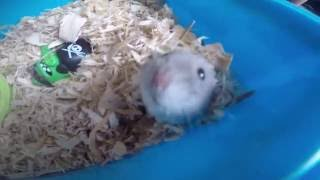 CLEANING HAMSTER CAGE • SAHMOMMAMANG