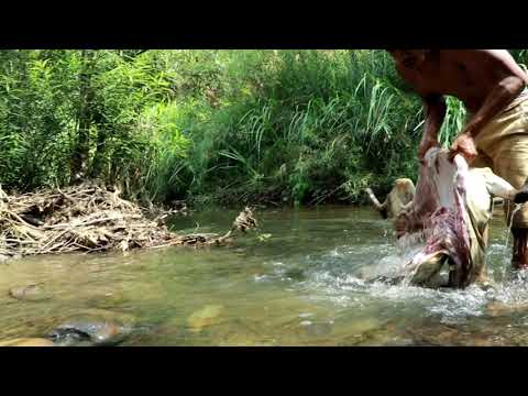 adventure in forest - Bezoar Ibex Hunting end cooking  Eating delicious