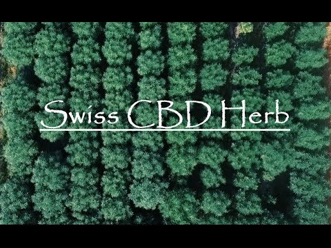 CBD Cannabis Outdoor Grow - July 2018 - Switzerland