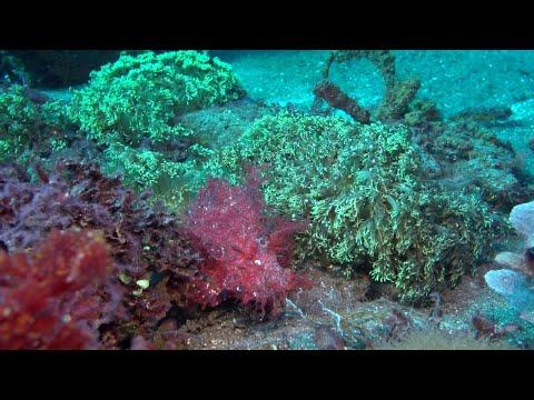 Weedy Scorpionfish || ViralHog