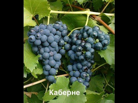 Как перенести Куст винограда на другое место без корчевки