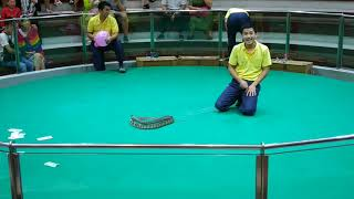 Xiếc rắn nguy hiểm chết người
