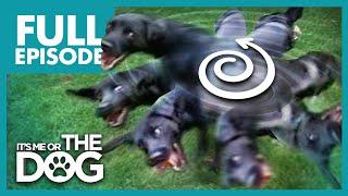 The Tornado Terrier: Lottie   Full Episode   It's Me or the Dog