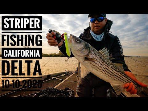 Topwater Striper Fishing On The California Delta 10-10-2020 - Fall Striped Bass Fishing Has Begun