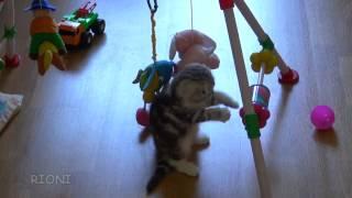 toys, rattles and one kitten | Іграшки, брязкальця і кошеня