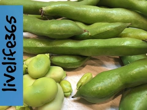 How To...Eat Fava Beans