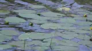SIRENIA - This Lonely Lake