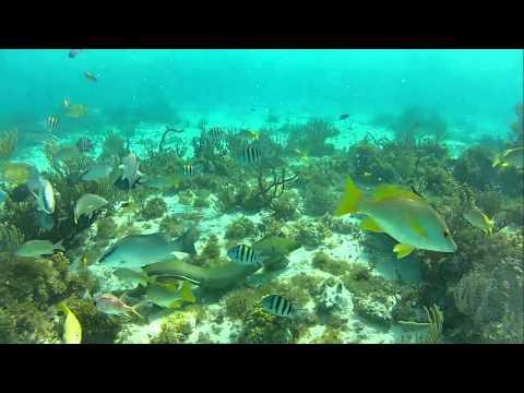 Cayman Feb 2013