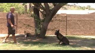 All-american K-9 Dog Training Arizona
