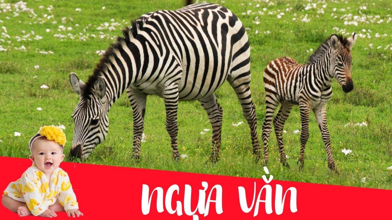 Dạy bé học con ngựa vằn | Dạy em bé tập nói tên và hoạt động các con vật