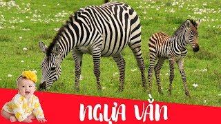 Dạy bé học con ngựa vằn   Dạy em bé tập nói tên và hoạt động các con vật