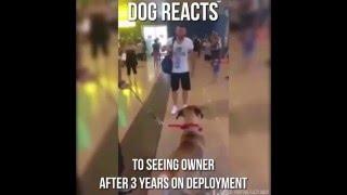 3 Yıl Aradan Sonra Sahibini Gören Köpek
