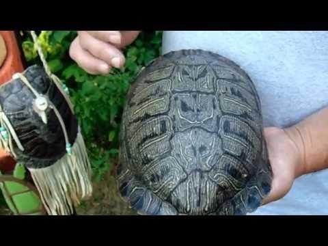 13 Moons On Turtles Back A Native American Calendar.