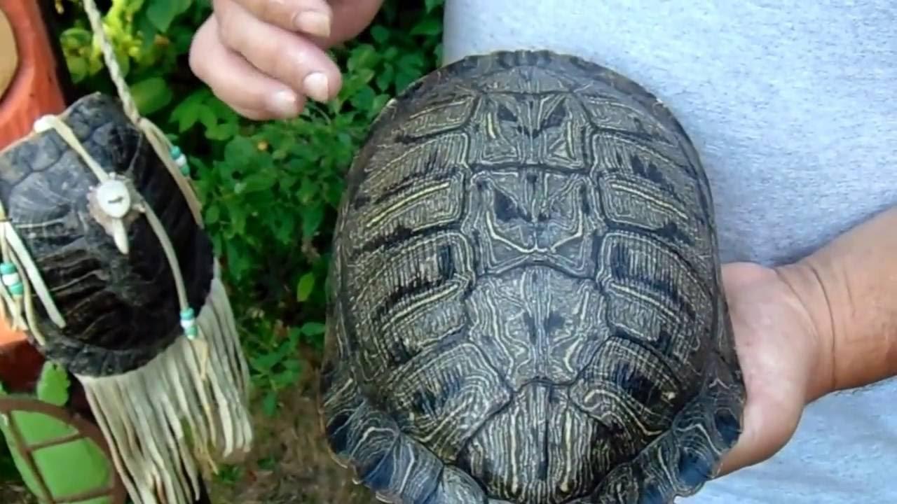 13 Moons On Turtles Back A Native American Calendar Youtube