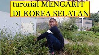 TUTORIAL CARA MENGARIT ( KOREA SELATAN )