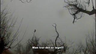 Kragejagt 2016-03-13 / Crow Shooting