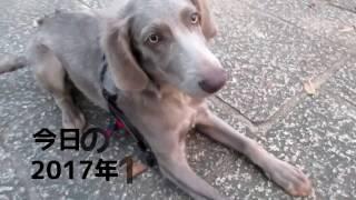 犬と散歩するだけの動画.