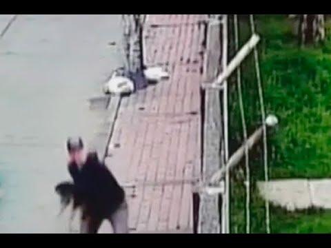 Lanzó a perrita por encima de un muro para deshacerse de ella | Noticias Caracol