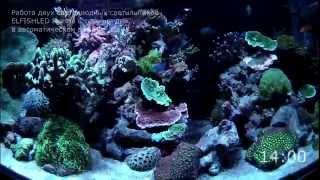 LED Работа двух светодиодных светильников ELFISHLED Marine в морском аквариуме(В течение дня мы проводили съемку нашего аквариума. В видео представлено как меняется спектр света диодных..., 2015-02-15T22:23:55.000Z)