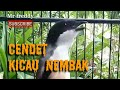 Suara Cendet Buat Perangsang Cendet Paud Untuk Ikut Bunyi  Mp3 - Mp4 Download