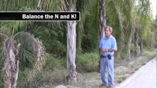 Nutritional Deficiencies in Palms