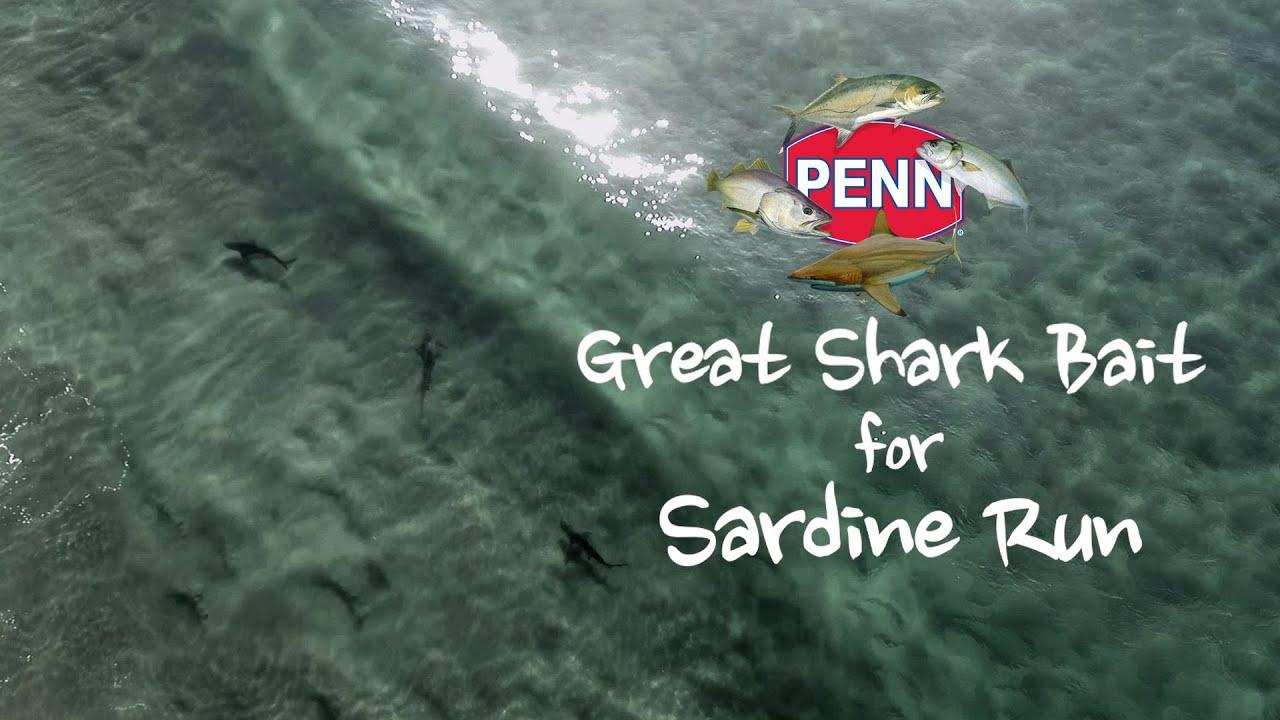 Great Shark Bait for Sardine Run