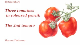 Three tomatoes in coloured pencil project - part 3: Gaynor Dickeson