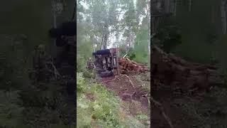 Карма настигла грабителей леса в Иркутской области