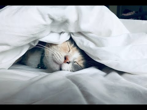 Funny Cats and Kittens Sleeping Compilation - Funny Cat Video