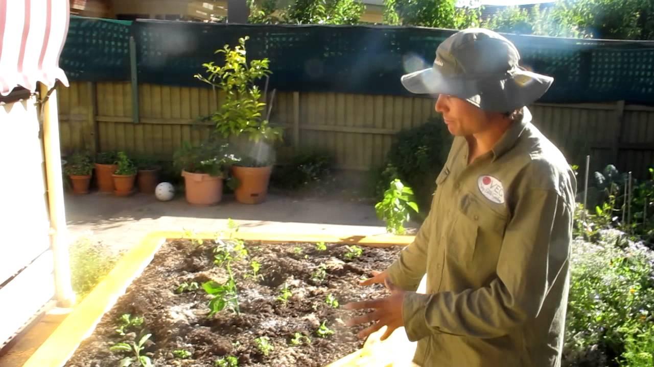 small backyard garden youtube