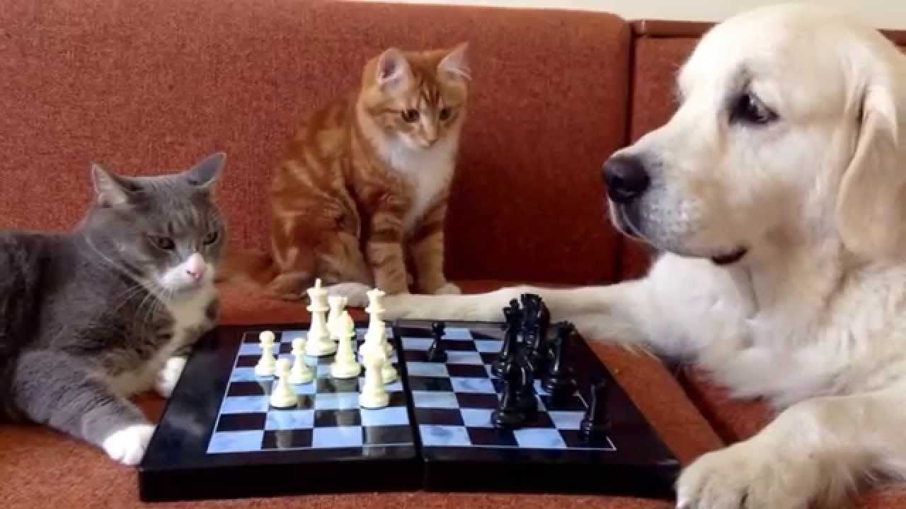 My cat and dog fight, How do I stop it? |Playing Cats And Dogs