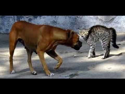 اجمل واروع قتال بين كلب و قط || cat Vs dog