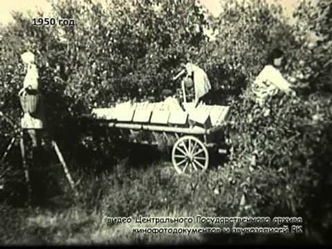 История большого города (яблоки апорт)