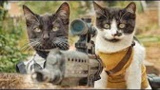 chó mèo hài hước cute | tik tok trung quốc - tik tok thú cưng siêu dễ thương | cats tv
