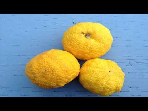 Lima Fruta Para Que Sirve - Propiedades Medicinales De La Lima