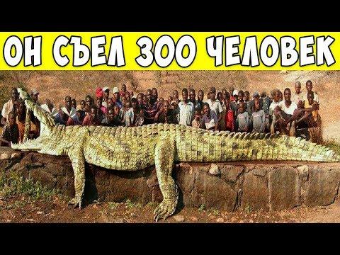 8 Самых Опасных Животных в Истории