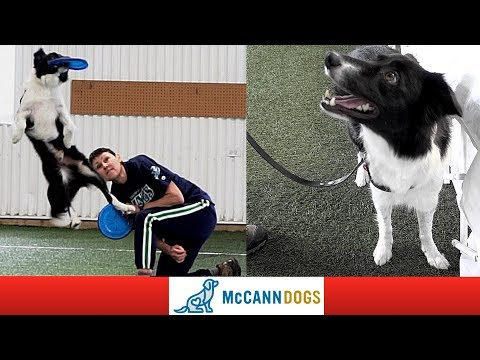 The Disc Dog World Champion- Who Is Totally Deaf!