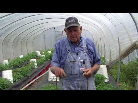 Difference In High Tunnel and Greenhouse, Ep 23