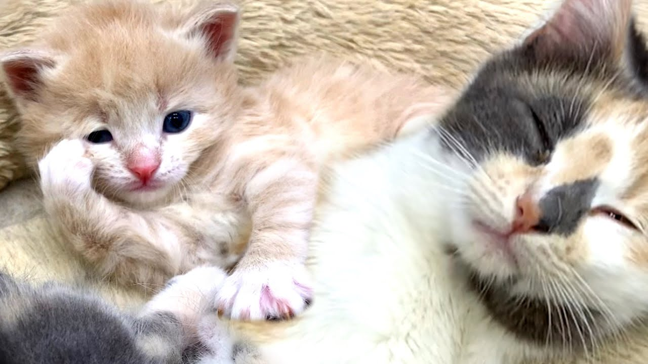 5 of the most naughty kittens in the world do not let mommy cat sleep