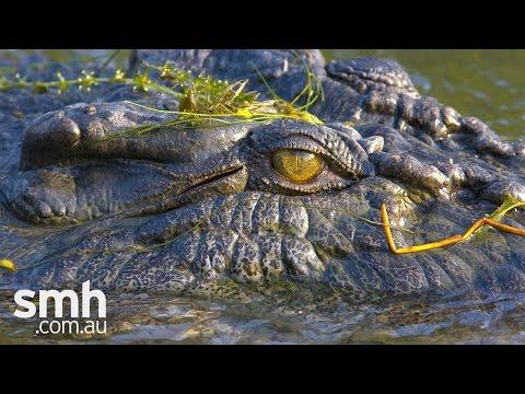Crocodile dilemma in Kakadu
