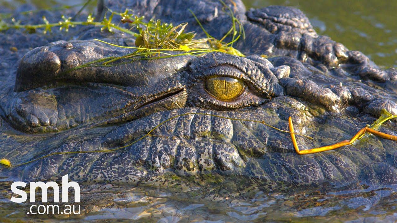 The Crocodile's Dilemma - TV.com