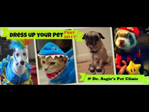 Dog & Cat Dress @ Vet in Dhaka City Pet Doctor in Bangladesh @ Dr. Sagir's Pet Clinic 01912251312
