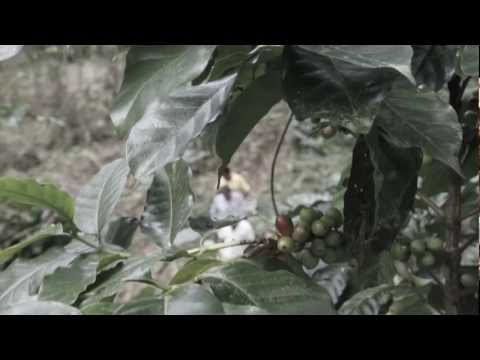 Manos Unidas: A Honduran Coffee Farm Documentary