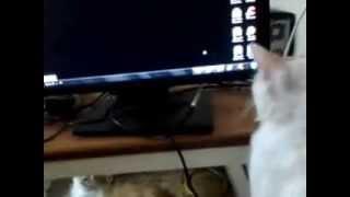 قطة تلعب مع سهم الماوس ههههه