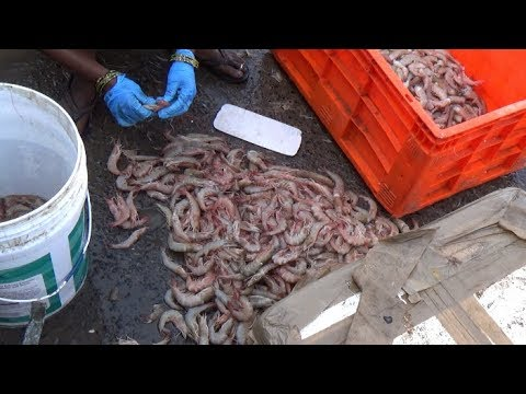 Prawns cleaning | Daily wagers cleaning prawns in Kakinada harbour