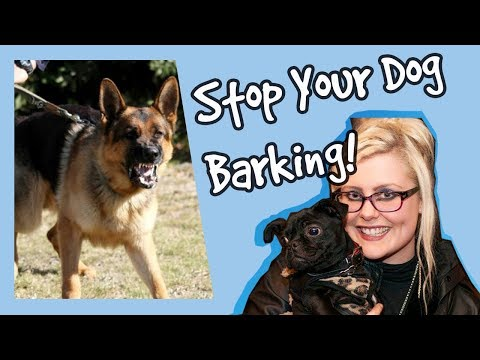 how-to-stop-your-dog-barking-at-other-dogs!-stop-dogs-barking-top-tips!-plus-competition!