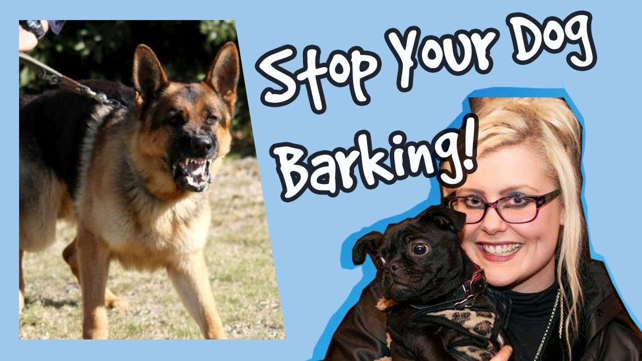 how to stop your dog barking at other dogs stop dogs barking top tips plus competition - Best Way To Stop A Dog From Barking