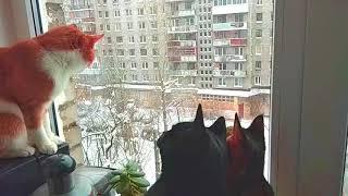 Кошки слышат весеннее щебетание птиц ...